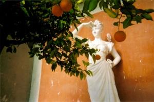 Orange tree & Statue